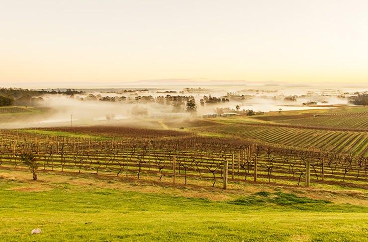 The Hunter Valley, best travel destination in NSW
