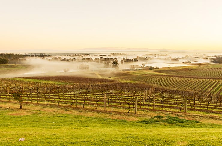 The Hunter Valley, best travel destination in NSW