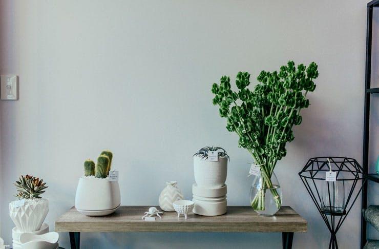 Indoor-plants-brisbane