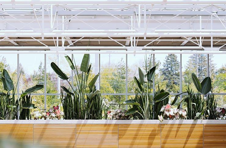 Perth Indoor Plant Festival