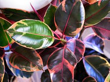 The Indoor Plants Trends You Need To Know About This Year