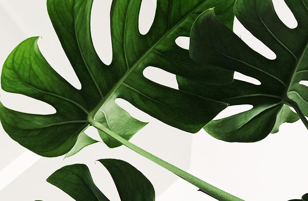 A Guide To Indoor Plants For Serial Plant Killers Melbourne The