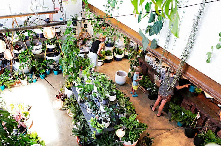 Where To Buy Indoor Plants In Perth Perth The Urban List