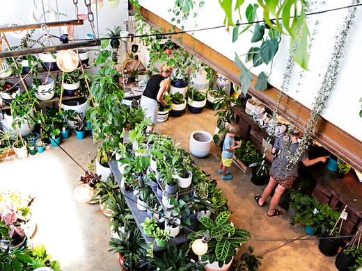 Where To Buy Indoor Plants In Perth Perth Urban List