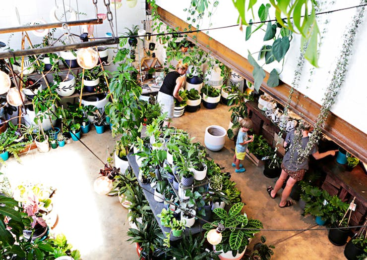 stylist design house plant seeds. By Anna Franklyn  10 Nov 2016 Where To Buy Indoor Plants In Perth The Urban List