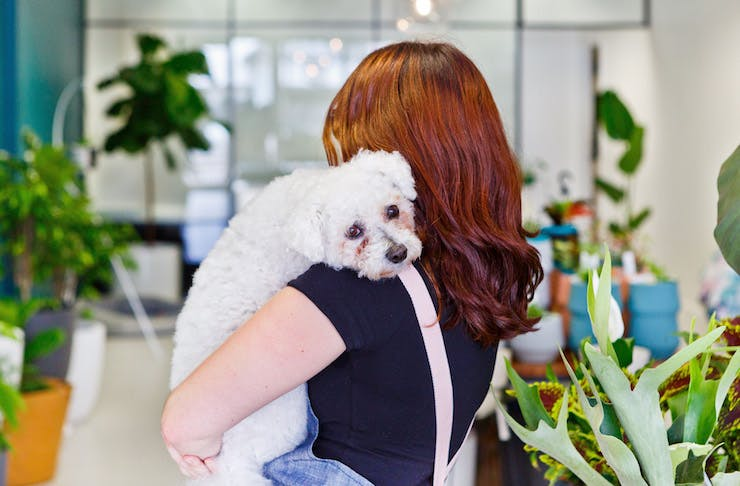 Indoor Plants That Won T Harm Your Pets Australia The Urban List