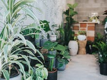 Where To Buy Indoor Plants On The Gold Coast