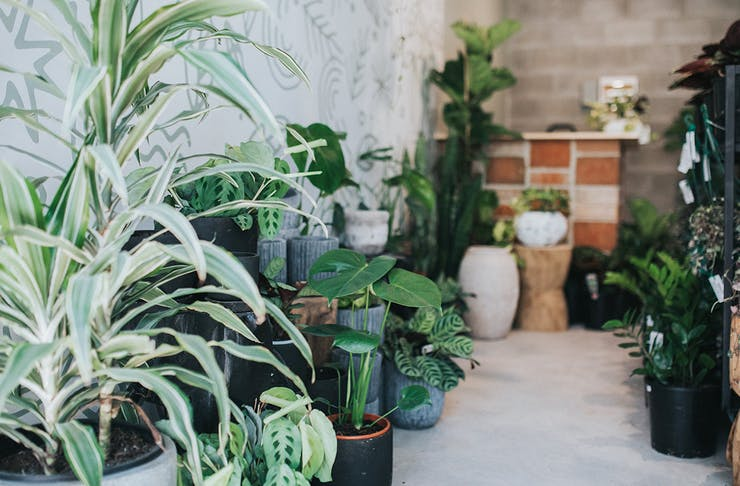 best indoor plant shops on gold coast