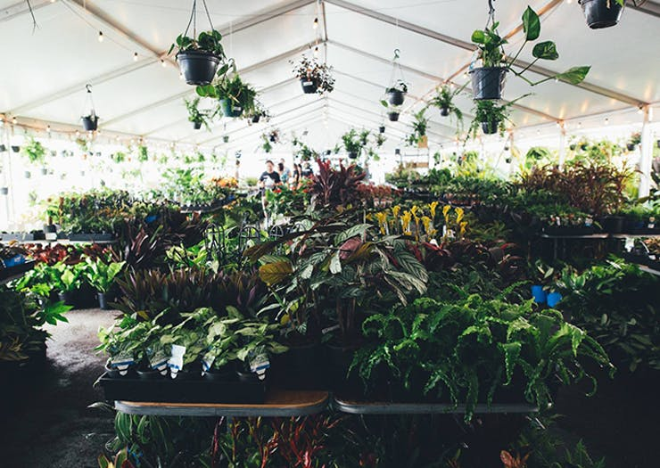 Drop Everything, Australia's Famous Indoor Plant Warehouse Sale Is Heading Our Way