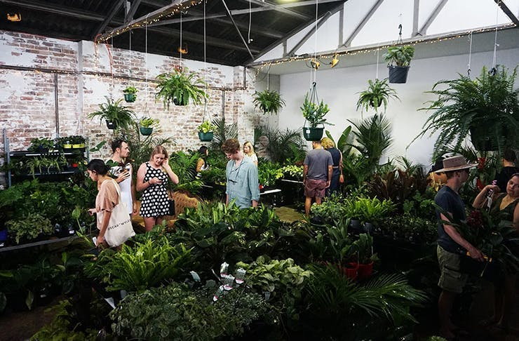 The Jungle Collective indoor plant warehouse sale gold coast