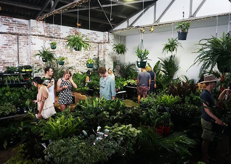 Green Up Your Home When The Jungle Collective's Famous Indoor Plant Warehouse Sale Returns