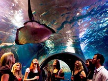 Here's Your Chance To Dine Under The Sea