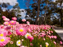 5 Things You Need To Get Out & Do In Perth This Spring