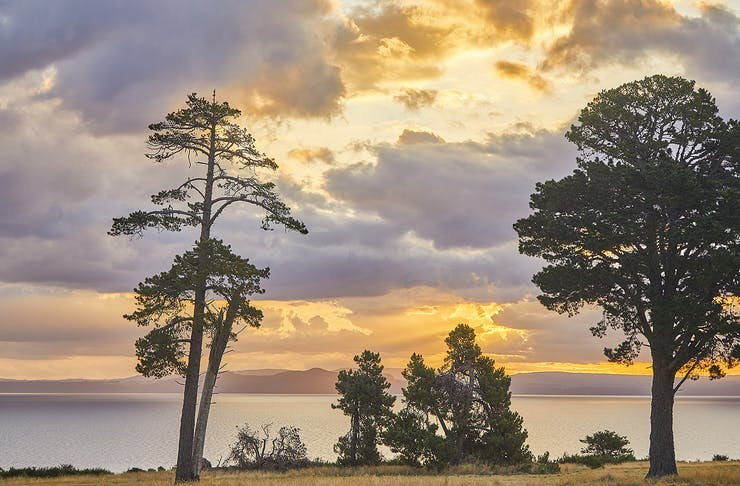 Moody sunset scene of trees and lake Taupo with mountain range in background in late afternoon light as the sun sets,Lake Taupo,Waikato,North Island,New Zealand
