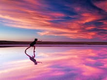 Stay On The Edge Of This Very Photogenic Pink Salt Lake In A Luxurious Converted Container