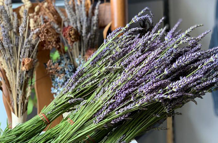 Freshly cut stalks of lavender tied in bunches