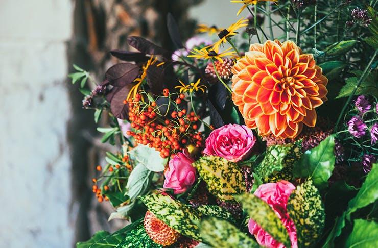 Living colour plant giveaway Sydney