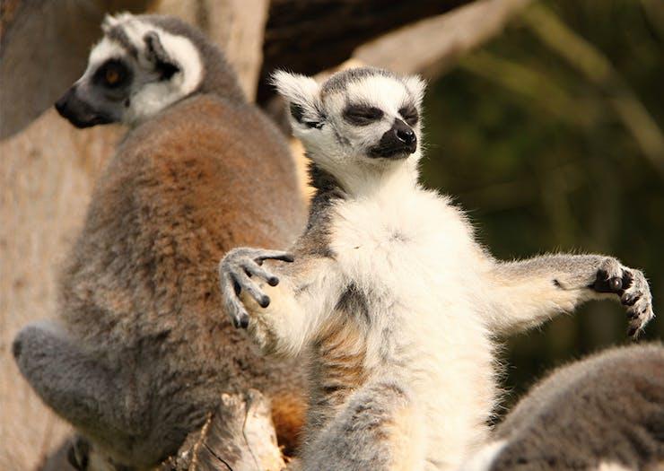 Lost Valley Currumbin Wildlife Sanctuary