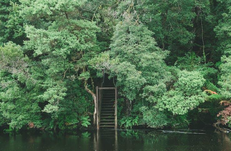 Staircase to Lovers Falls, Tasmania