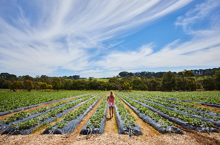 best-farms-sunshine-coast