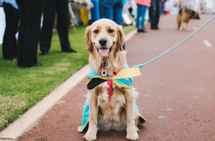 Things To Do Perth - Million Paws Walk
