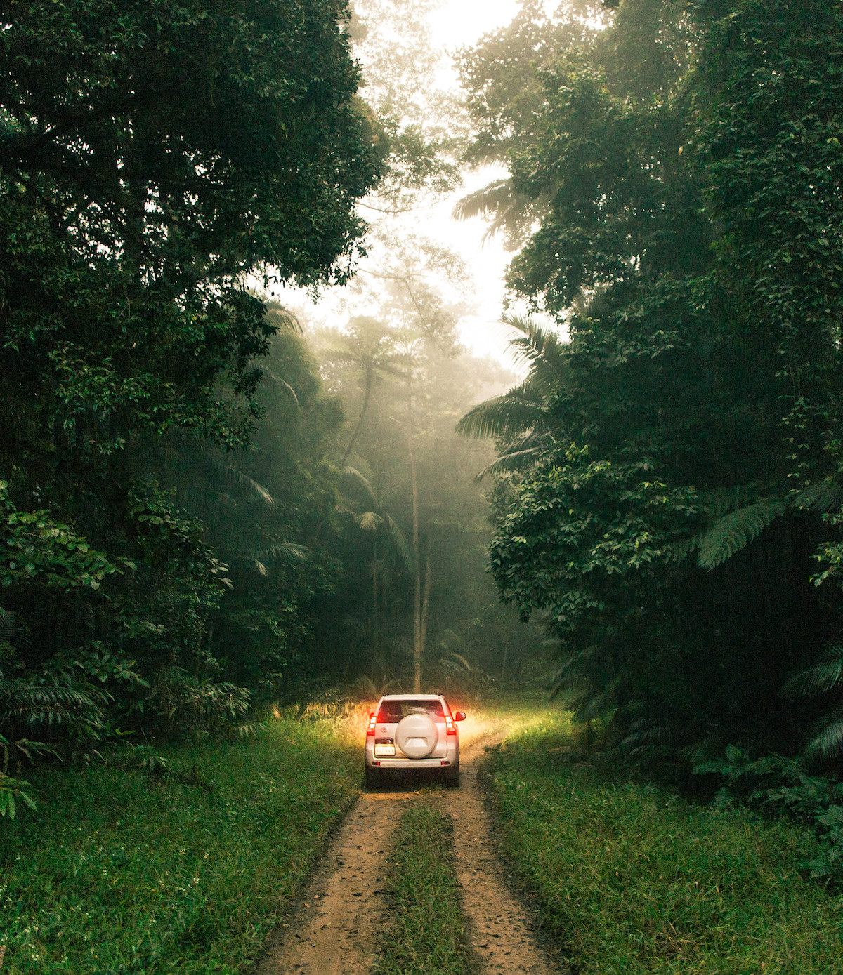 A car drives on a dirt track surrounded by lush bush.