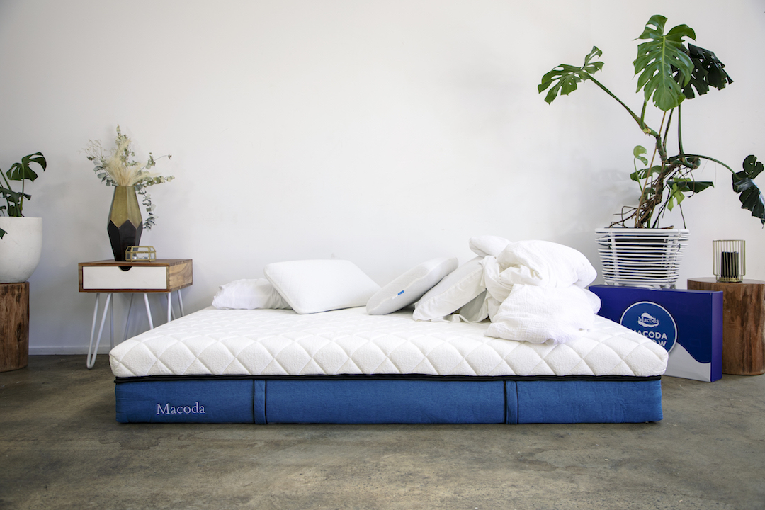 A huge mattress sits on a concrete floor next to a lush pot plant.