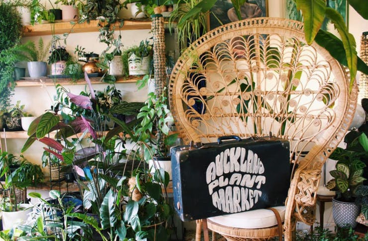 A chair with a suitcase that says 'Auckland Plant Market' on it with lots of plants in the background.