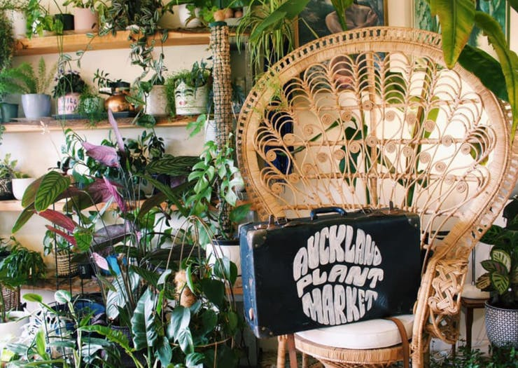 Make A Beeline, Auckland's Huge Plant Market Has Been Shifted To March