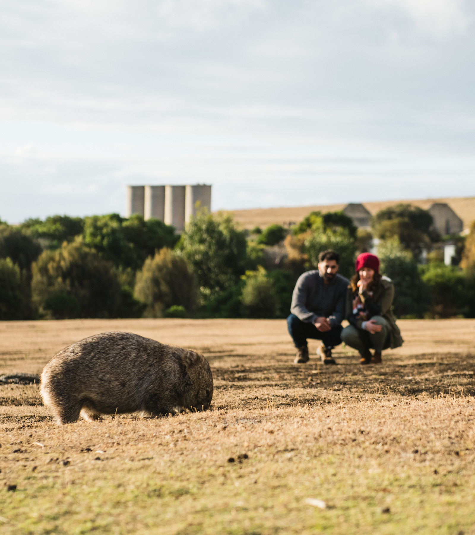 A couple gaze at a wild wombat from a distance on Maria Island.