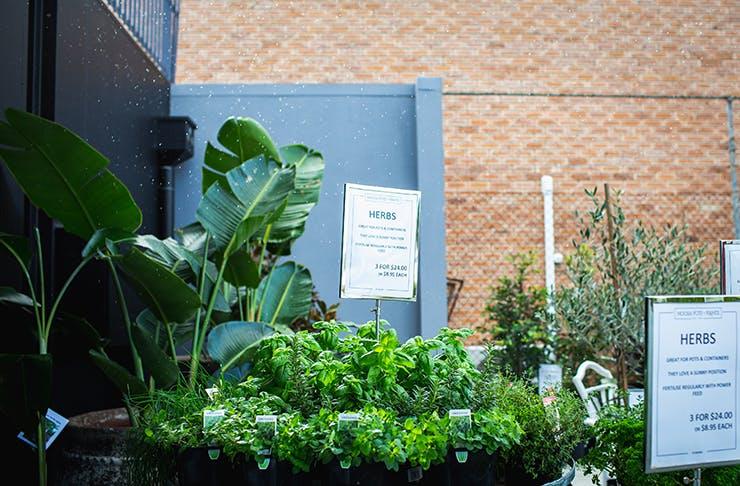 Noosa Pots & Plants