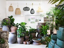 Inside Look: We've Just Discovered A Stunning Indoor Plant Oasis On The Coast