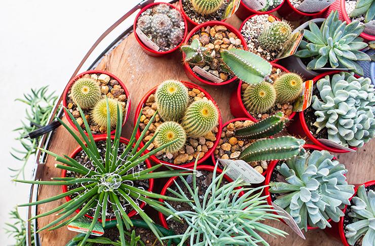 noosa pots and plants