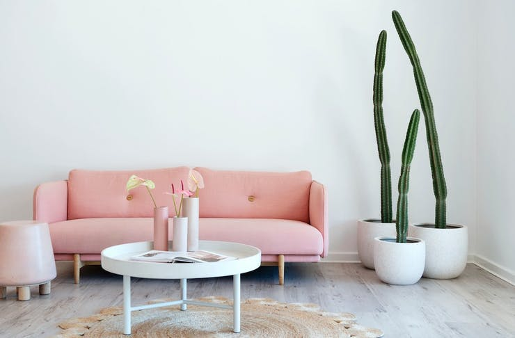 Pink couch and cacti at Olive & July