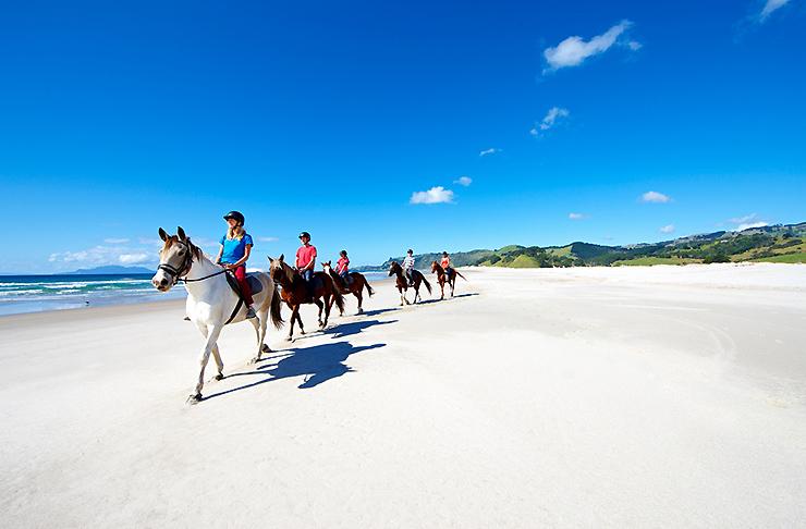 Horse Trekking on Pakiri Beach
