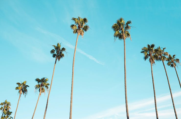 Guide To Palm Springs