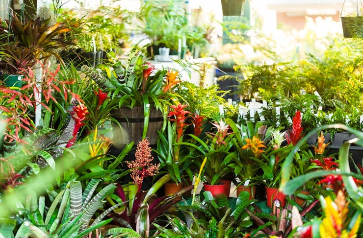 rare plant sale sydney