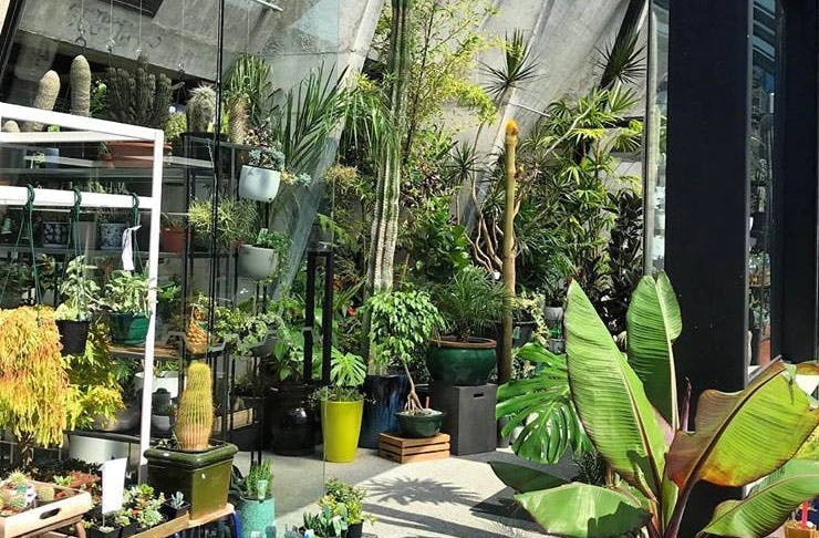 11 Of The Best Places To Buy Plants In Auckland Auckland The
