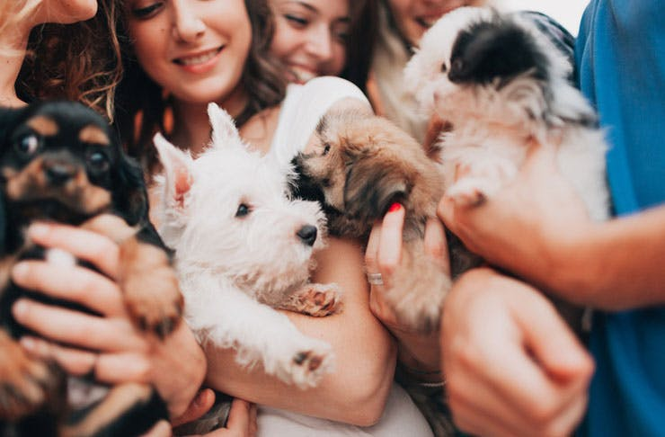 Puppies Are Coming to Martin Place Sydney Delta Society