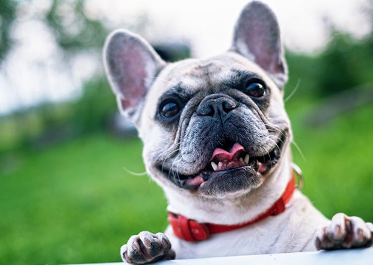 Grab Your Furry BFF! RSPCA's Million Paws Walk Is Back