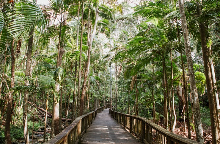 A timber boardwalk runs through the middle of rainforest.