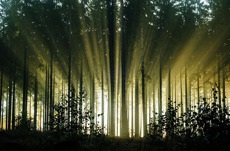 The picture of a forest with light beaming through the trees.