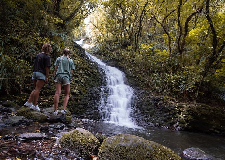 8 Of Dunedin's Best Running Tracks To Keep Your Endorphins Flowing