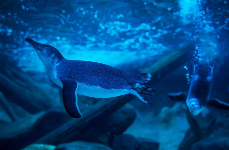 Sea life penguin livestream