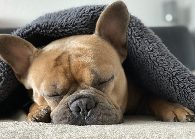The Best Dog Beds In Australia So You Can Let Sleeping Dogs Lie