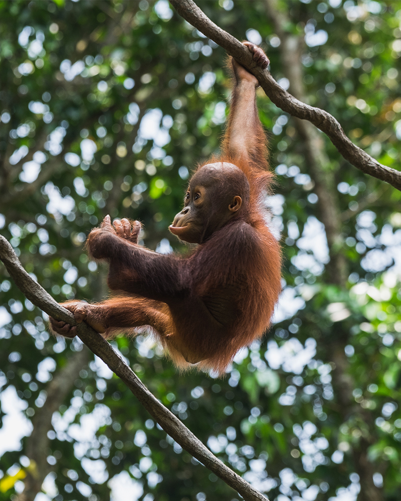 Solo Travel Singapore Zoo
