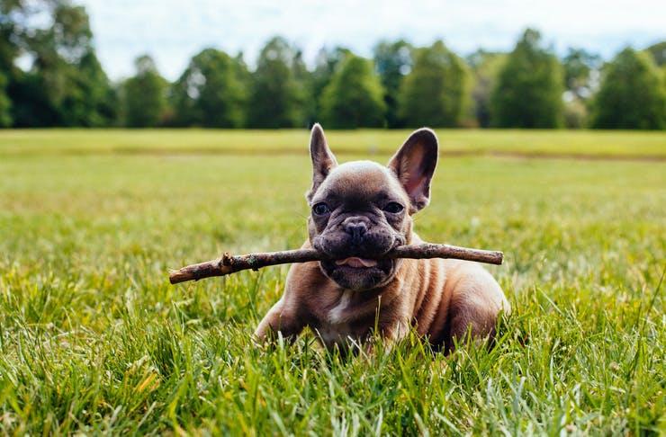 best-dog-parks-sunshine-coast