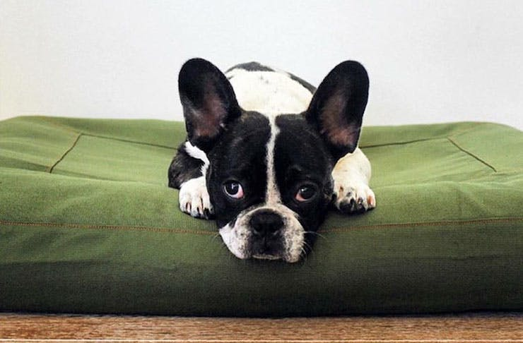 8 Places To Buy Designer Dog Accessories Online