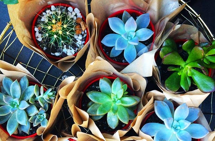 Plant sale Brisbane