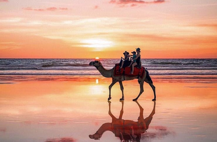 A camel walks along the beach at sunset